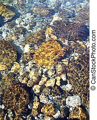 rocks in water - rocks in stream, new zealand