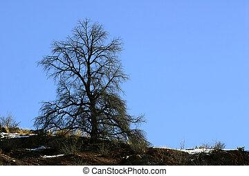Tree on ridgeline against bright blue sky