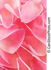 Petals - Rose petals