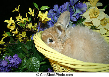 Bunny - Fuzzy Easter bunny in yellow basket surrounded by...