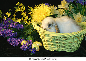 Easter Bunny - Adorable fuzzy easter bunny in yellow easter...