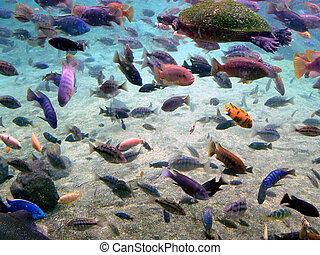 Aquatic Gathering 2 - Marine shot