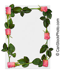 Rose frame 1 - Sheet of paper with pink roses, love letter...