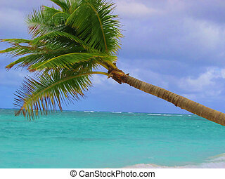 Palm Tree - Palm tree with aqua ocean background