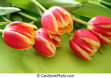 stack of tulips - bunch of colourful tulips on green...