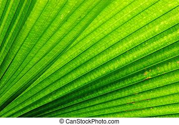 ventilador, palma, folha