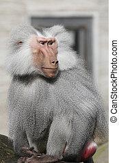 Ape zoo Frankfurt