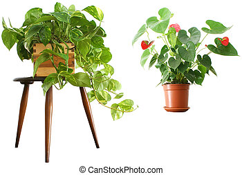 Houseplants 2 for 1 - House plants over white