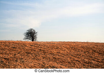 Barren Tree - A lonely barren tree set against a clear blue...