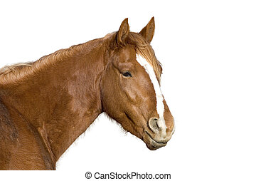 Horse isolated - Isolated farm horse