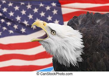 Eagle composite - Bald eagle and american flag