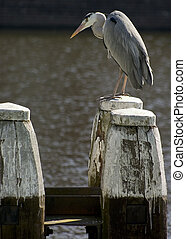 Bird with posts - Tall bird sitting on large posts in wharf