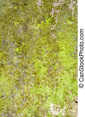 Lichen and Moss Grunge Nature Background