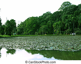 Park 2 - Park – Lake with Cup Leafs Very beautiful...