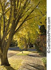 autumn scene - trees and sidewalk,autumn leaves