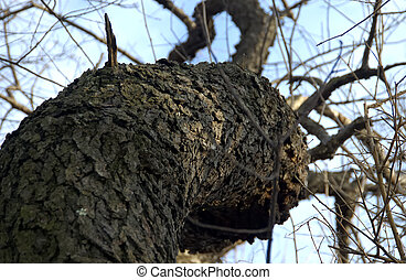 Tree Trunk - Photo of a Curved Tree Trunk