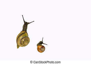 Two cute snails on isolated background