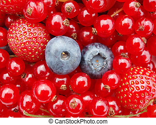 Berries - Close-up of bilberry, strawberry and currants