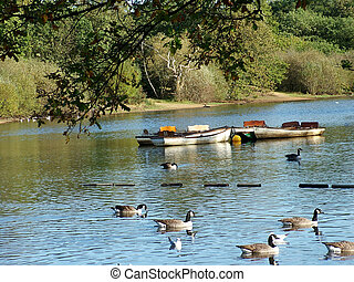 Boating lake - Two boats tied up in the middles of a lake...