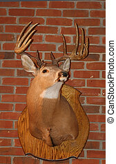 Deer - White tail deer mounted on brick wall
