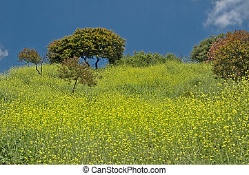 Spring has Sprung - A field of exploding yellow wildflowers