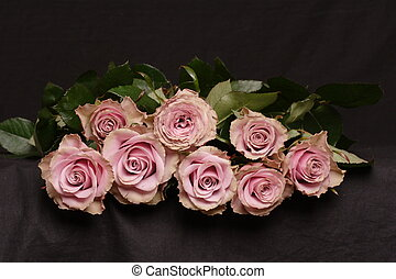 Pink roses - pink roses on a black background