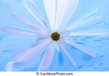 Abstract Flower - Flower on blue background, abstract