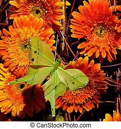 Flowers 25 - Butterfly on daisy flowers