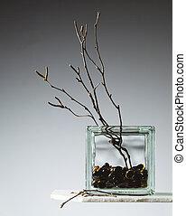 vaso, salgueiro, ramos