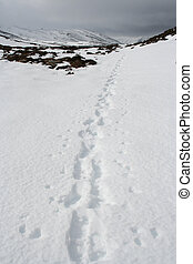 Footsteps in snow, Cairngorms, Scottish Highlands