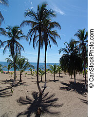 Beach table - Palmtrees at the beach in Costa Rica