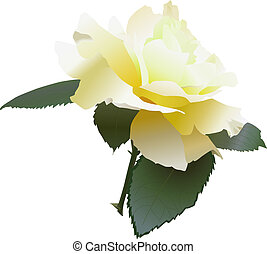 Yellow Rose -- ideal for promotions, greeting cards,...