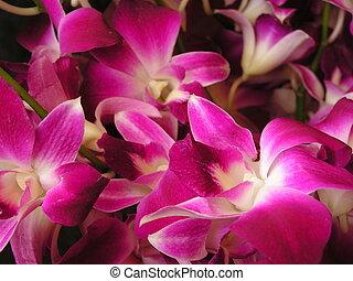 purple flowers - a bouquet of purple flowers