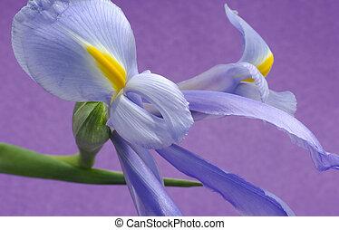 Flower - Spring Flower
