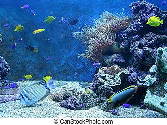 Aquarium - Fishes in an aquarium