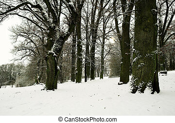 Regensburg 2 - Forest in Germany, Regensburg, black and...