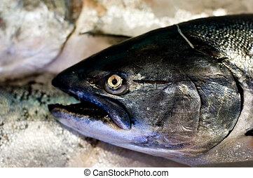 國王, 三文魚
