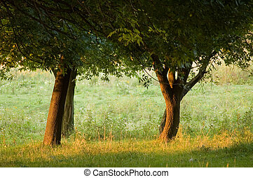 trees in park in eneving sun rays