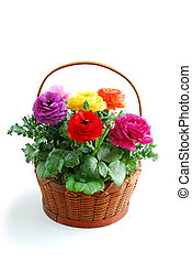 Flower basket - Basket of coloful flowers on white...