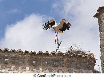 Stork takeoff