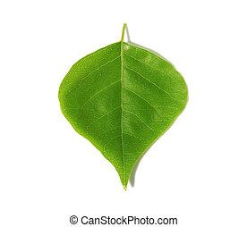 verde, folha