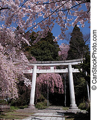 Japanese spring view - Characteristic view during the cherry...