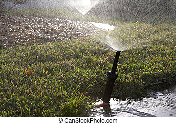 Water sprinkler for grass, Sarasota florida, united states...
