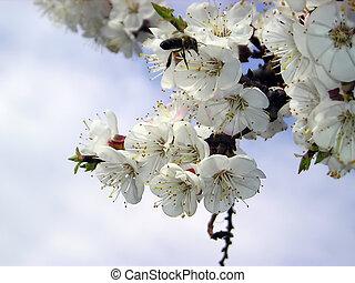 el, abeja