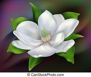 Magnolia - Digital illustration from low resolution scan...