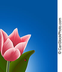 Pink Tulip Background - Tulip with waterdrops & ladybug....