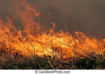 grass fire - grassfire closeup