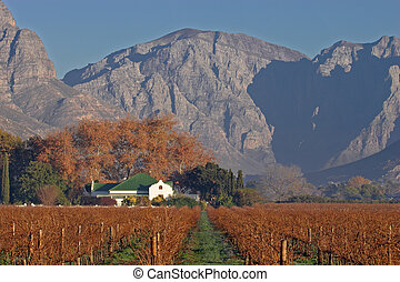 Vineyard landscape - Landscape of vineyards and homestead,...