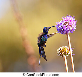 Hummingbird feeding on the flower