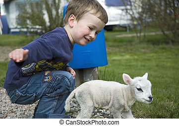 Little boy and little sheep - A 5 year old trying to catch a...